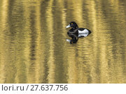 Купить «nature water day outside wildlife», фото № 27637756, снято 19 октября 2018 г. (c) PantherMedia / Фотобанк Лори