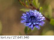 Купить «nature blue plant flower blossom», фото № 27641940, снято 24 мая 2019 г. (c) PantherMedia / Фотобанк Лори