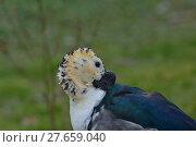 Купить «feather beak feathers waddle cackle», фото № 27659040, снято 18 июня 2019 г. (c) PantherMedia / Фотобанк Лори