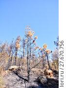 Купить «Effects of the Fire in a Forest», фото № 27670756, снято 27 марта 2019 г. (c) PantherMedia / Фотобанк Лори