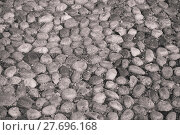 Купить «Round stones in the ground», фото № 27696168, снято 19 ноября 2019 г. (c) PantherMedia / Фотобанк Лори