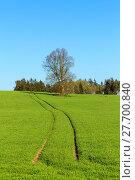 Купить «summer rural sping landscape», фото № 27700840, снято 27 июня 2019 г. (c) PantherMedia / Фотобанк Лори