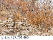 Купить «Forest after fire on a mountain», фото № 27701460, снято 27 марта 2019 г. (c) PantherMedia / Фотобанк Лори