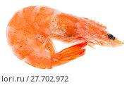 Купить «frozen boiled shrimp isolated on white», фото № 27702972, снято 22 июля 2018 г. (c) PantherMedia / Фотобанк Лори