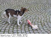 Купить «animal skin dog engulf devour», фото № 27705372, снято 17 июля 2019 г. (c) PantherMedia / Фотобанк Лори