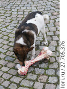 Купить «animal skin dog engulf devour», фото № 27705376, снято 17 июля 2019 г. (c) PantherMedia / Фотобанк Лори