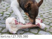 Купить «animal skin dog engulf devour», фото № 27705380, снято 17 июля 2019 г. (c) PantherMedia / Фотобанк Лори