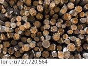 Купить «Pile of wood logs stacked», фото № 27720564, снято 16 июня 2019 г. (c) PantherMedia / Фотобанк Лори