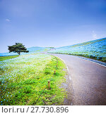 Купить «imageing of Mountain, Tree and Nemophila at Hitachi Seaside Park in spring with blue sky at Ibaraki, Japan», фото № 27730896, снято 26 мая 2019 г. (c) PantherMedia / Фотобанк Лори