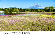 Купить «Fuji with the field of pink moss at Shibazakura festival, Yamanashi, Japan», фото № 27731620, снято 17 июля 2019 г. (c) PantherMedia / Фотобанк Лори