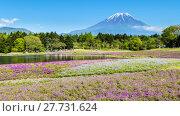 Купить «Fuji with the field of pink moss at Shibazakura festival, Yamanashi, Japan», фото № 27731624, снято 17 июля 2019 г. (c) PantherMedia / Фотобанк Лори