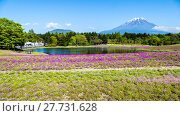 Купить «Fuji with the field of pink moss at Shibazakura festival, Yamanashi, Japan», фото № 27731628, снято 17 июля 2019 г. (c) PantherMedia / Фотобанк Лори