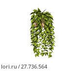 Купить «flowerpot ivy frondage tendrils balkonpflanzen», фото № 27736564, снято 16 октября 2018 г. (c) PantherMedia / Фотобанк Лори