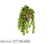 Купить «flowerpot ivy frondage tendrils balkonpflanzen», фото № 27736664, снято 16 октября 2018 г. (c) PantherMedia / Фотобанк Лори