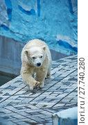 Купить «Polar bear cub walks», фото № 27740280, снято 18 октября 2018 г. (c) PantherMedia / Фотобанк Лори