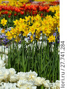Купить «plant flower park spring flowers», фото № 27741284, снято 18 октября 2018 г. (c) PantherMedia / Фотобанк Лори