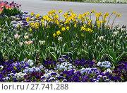 Купить «plant flower park spring flowers», фото № 27741288, снято 18 октября 2018 г. (c) PantherMedia / Фотобанк Лори
