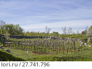 Купить «nature spring field agriculture scenery», фото № 27741796, снято 26 мая 2019 г. (c) PantherMedia / Фотобанк Лори