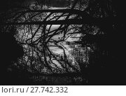 Купить «Silhouettes of tree and branches reflect in water», фото № 27742332, снято 22 апреля 2019 г. (c) PantherMedia / Фотобанк Лори