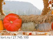 Купить «Pumpkin harvest season on the farm», фото № 27745100, снято 19 июня 2019 г. (c) PantherMedia / Фотобанк Лори