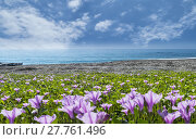 Купить «beatiful pnk flower beside the beach with nice background color», фото № 27761496, снято 22 октября 2018 г. (c) PantherMedia / Фотобанк Лори