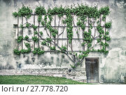 Купить «Winemakers wall 6064», фото № 27778720, снято 21 сентября 2019 г. (c) PantherMedia / Фотобанк Лори