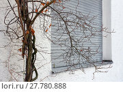 Купить «the old tree in front of the closed window. shutters in front of a window», фото № 27780888, снято 22 февраля 2019 г. (c) PantherMedia / Фотобанк Лори