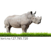 Купить «white rhinoceros, square-lipped rhinoceros isolated», фото № 27785720, снято 27 мая 2019 г. (c) PantherMedia / Фотобанк Лори