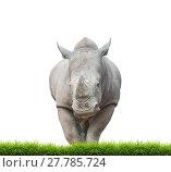 Купить «white rhinoceros, square-lipped rhinoceros isolated», фото № 27785724, снято 27 мая 2019 г. (c) PantherMedia / Фотобанк Лори