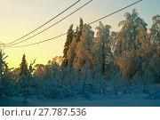 Купить «Iced wires of transmission lines over a glade in a winter snow-covered forest», фото № 27787536, снято 12 декабря 2017 г. (c) Евгений Харитонов / Фотобанк Лори