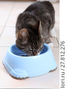 Купить «cat engulf devour pussycat fodder», фото № 27812276, снято 17 июля 2019 г. (c) PantherMedia / Фотобанк Лори