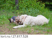 Купить «Две собаки - золотистый ретивер и йоркширский терьер тепло общаются», фото № 27817528, снято 5 июня 2016 г. (c) Татьяна Белова / Фотобанк Лори