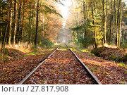 Купить «Old railroad tracks in dense hardwood forest», фото № 27817908, снято 20 июня 2019 г. (c) PantherMedia / Фотобанк Лори