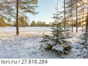Купить «Зимний пейзаж с заснеженными деревьями на краю поля», фото № 27818284, снято 8 января 2018 г. (c) Сергей Васильев / Фотобанк Лори