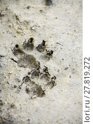 Купить «Dog paw imprint», фото № 27819272, снято 19 февраля 2019 г. (c) PantherMedia / Фотобанк Лори