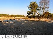 Купить «Early morning prairie and forest scene», фото № 27821804, снято 19 сентября 2019 г. (c) PantherMedia / Фотобанк Лори