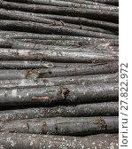 Купить «Pile of wood logs stacked», фото № 27822972, снято 16 июня 2019 г. (c) PantherMedia / Фотобанк Лори