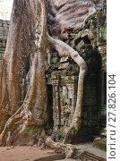 Купить «Ta Prohm temple, Angkor Wat, Cambodia», фото № 27826104, снято 28 декабря 2011 г. (c) Знаменский Олег / Фотобанк Лори