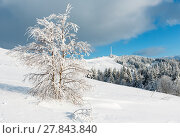 Купить «Winter hoar frosting trees, tower and snowdrifts (Carpathian mountain, Ukraine)», фото № 27843840, снято 23 января 2018 г. (c) Юрий Брыкайло / Фотобанк Лори