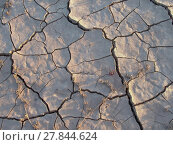 Купить «dried earth in the desert», фото № 27844624, снято 22 ноября 2019 г. (c) PantherMedia / Фотобанк Лори