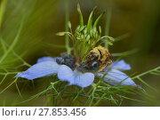 Купить «wing honey nectar sweetly suckle», фото № 27853456, снято 14 ноября 2018 г. (c) PantherMedia / Фотобанк Лори