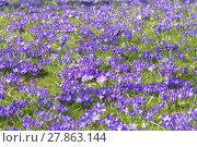 Купить «spring time», фото № 27863144, снято 21 марта 2019 г. (c) PantherMedia / Фотобанк Лори