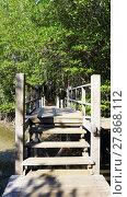 Купить «forest mangrove and the bridge walkway vertical», фото № 27868112, снято 22 июля 2019 г. (c) PantherMedia / Фотобанк Лори