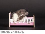 Купить «Rats in a toy bed», фото № 27888940, снято 26 марта 2013 г. (c) Argument / Фотобанк Лори