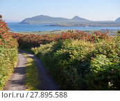 Купить «Small road leading to the sea in Dingle, Ireland», фото № 27895588, снято 26 марта 2019 г. (c) PantherMedia / Фотобанк Лори