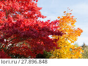 Купить «kräftige Farben von Laubbäumen im Herbst», фото № 27896848, снято 23 июля 2019 г. (c) PantherMedia / Фотобанк Лори