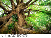 Купить «impressive tree trunk in beautiful light», фото № 27897076, снято 20 июля 2019 г. (c) PantherMedia / Фотобанк Лори