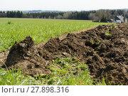 Купить «fresh soil - clod», фото № 27898316, снято 23 марта 2019 г. (c) PantherMedia / Фотобанк Лори