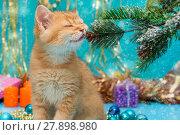 Купить «British kitten and Christmas decorations», фото № 27898980, снято 30 ноября 2017 г. (c) Okssi / Фотобанк Лори