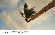 Купить «Lonely palm hanging on the beach during sunrise on Boracay. White beach at Boracay island, Philiphines. Shooting in motion.», видеоролик № 27907124, снято 10 февраля 2018 г. (c) Mikhail Davidovich / Фотобанк Лори
